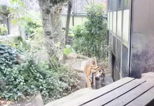3歳のクリスマス 動物園