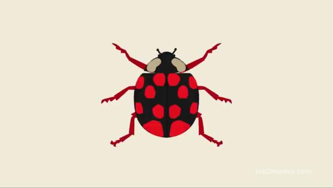 オンライン幼稚園 虫